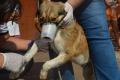 Centro de Zoonoses faz exames de leishmaniose em cães na zona norte
